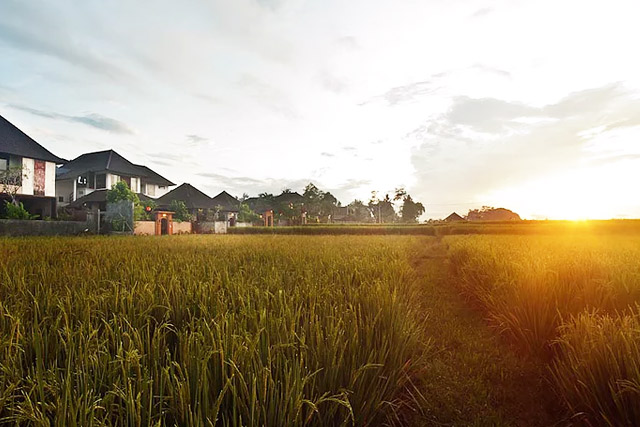 bali sunset over rice field
