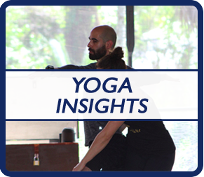 yoga insights