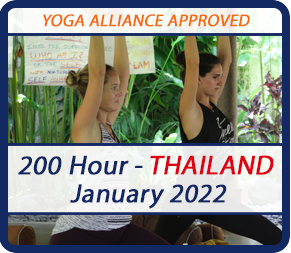 yoga teacher training in thailand january 2022